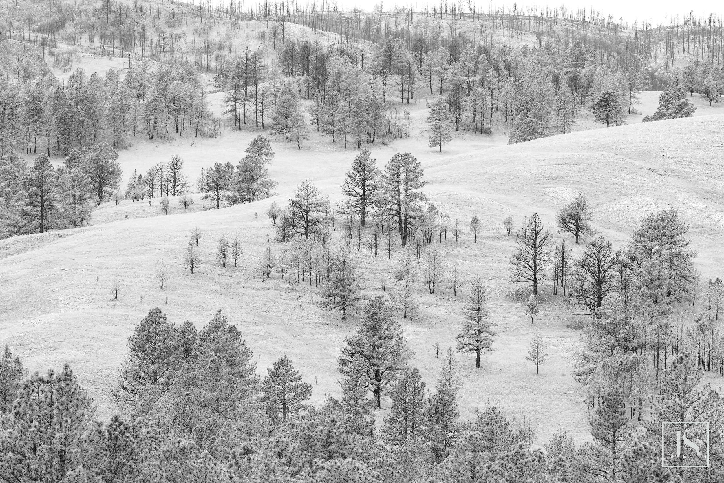 Custer Park, Black Hills, SD