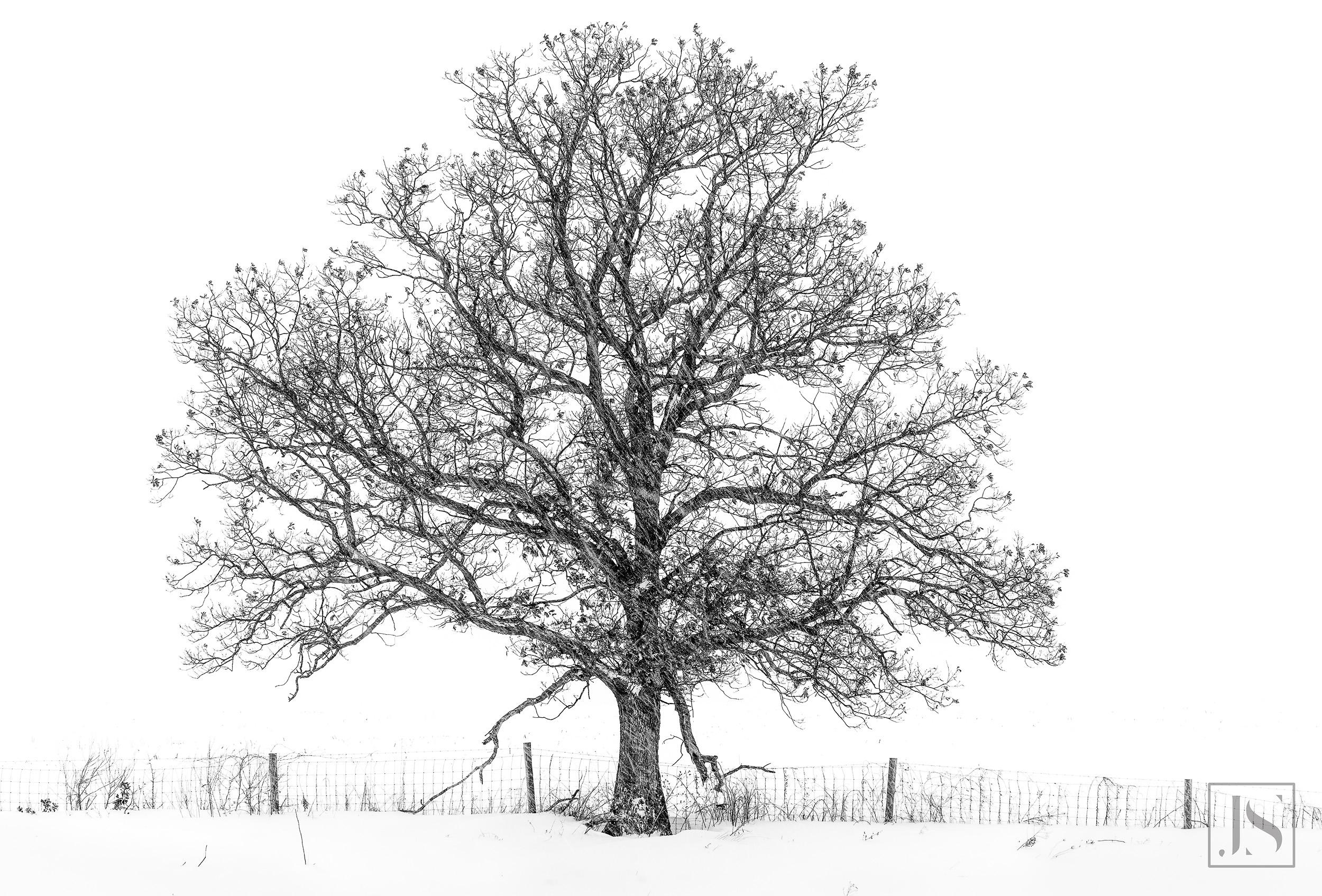 Tree in Blizzard-Dodgeville, WI-2014