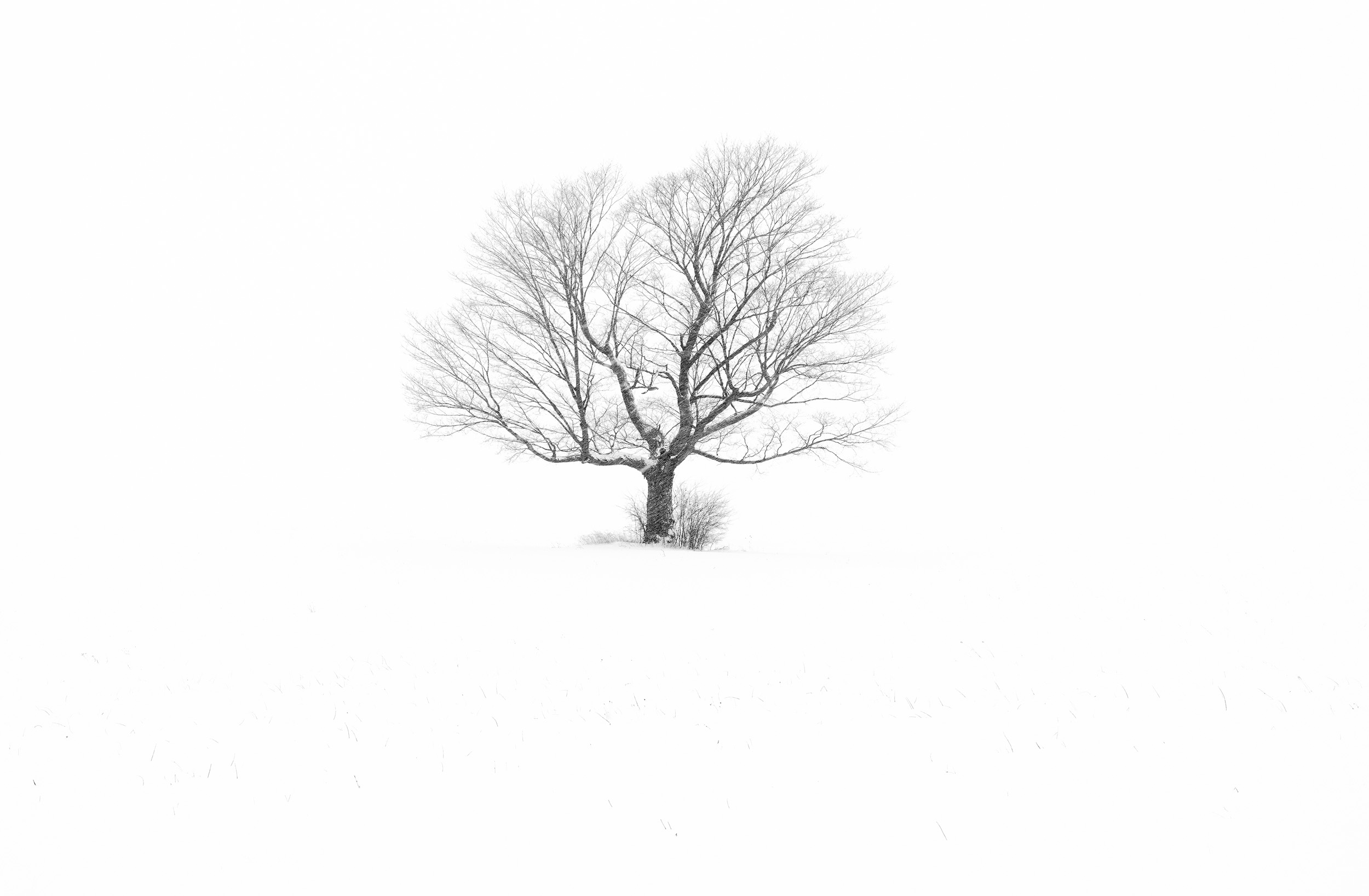 Isolated Winter Tree