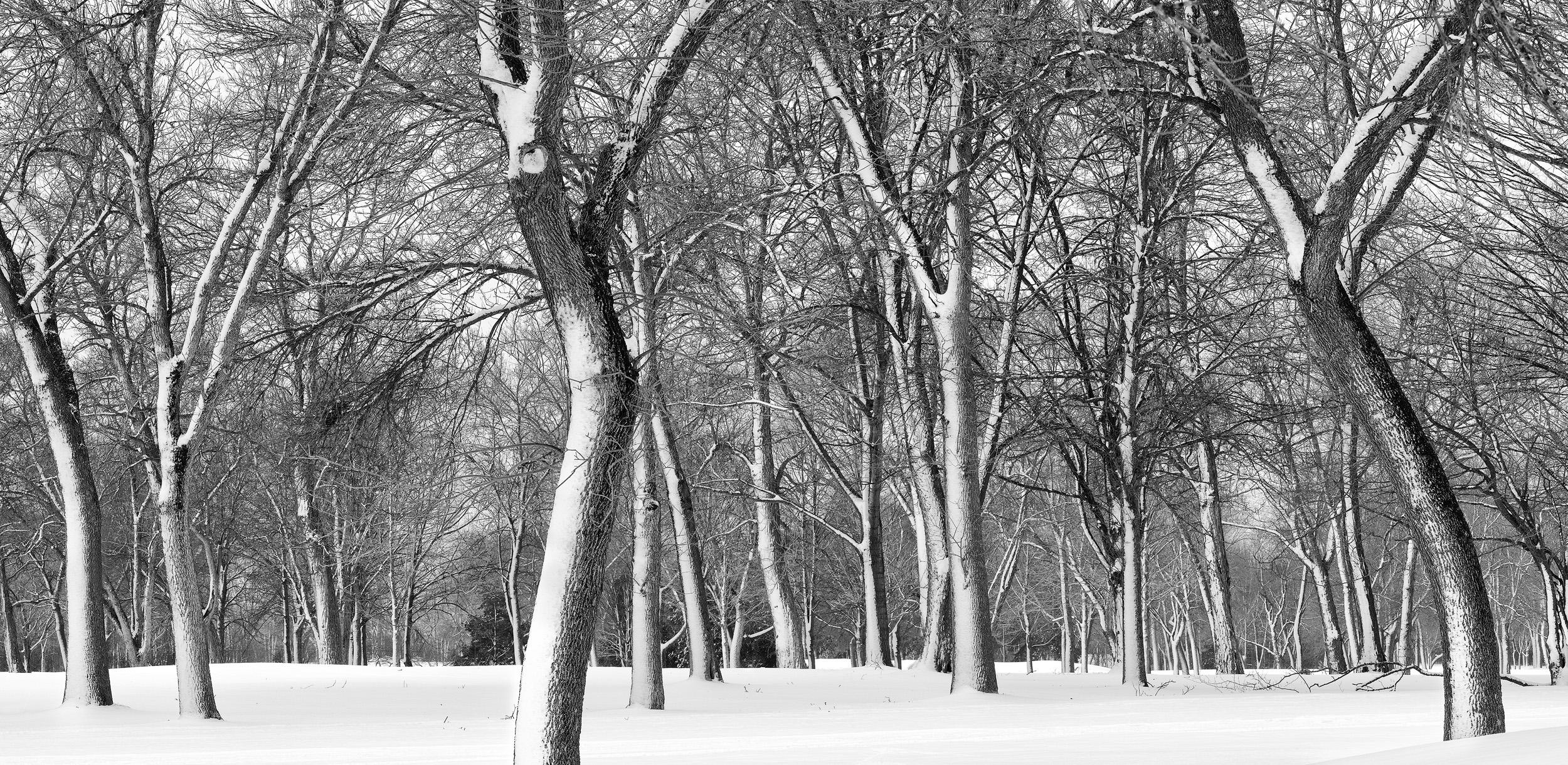 Snow Trees-Brown Deer, WI
