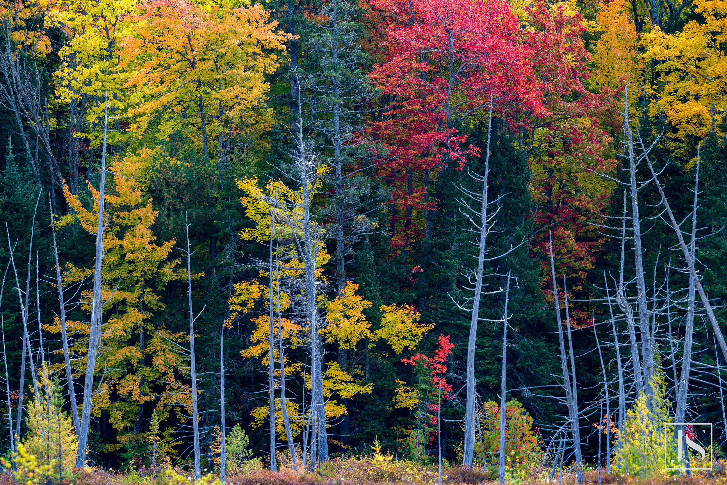 Group of Trees-Keweenaw Peninsula, MI-2015