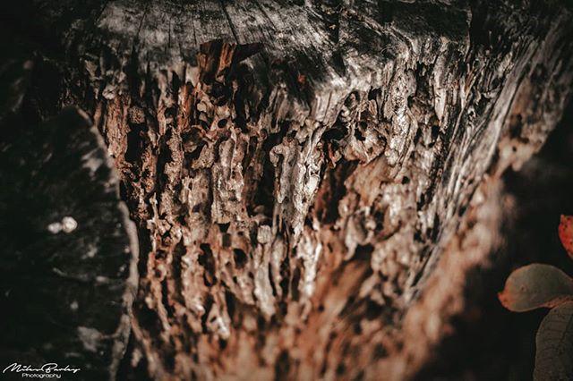 Food for something?! ----- Nikon D7500 Nikkor 50mm ----- #nikonphoto #nikon #nikonphotography #nikonsweden #nature #tree #forest #oldwood #closeup #woodworm #adobelightroom #wood #natural