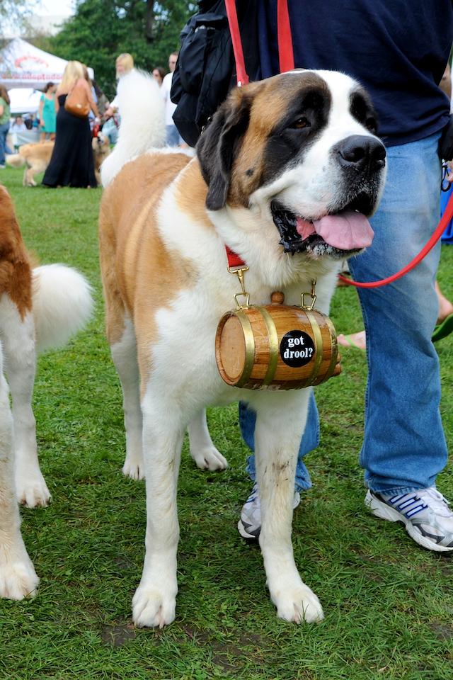 20110925_greendog_176.jpg