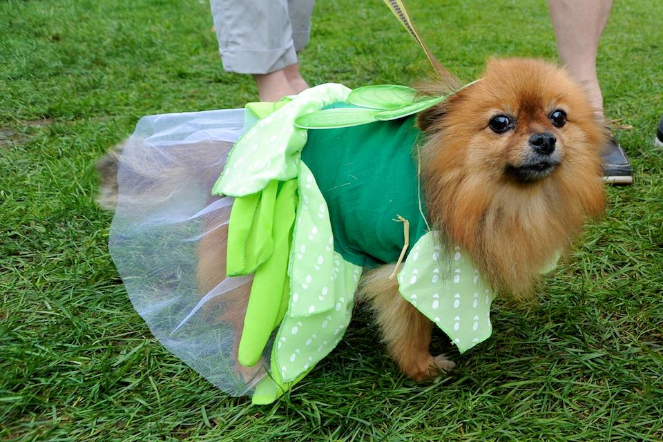 20110925_greendog_180.jpg