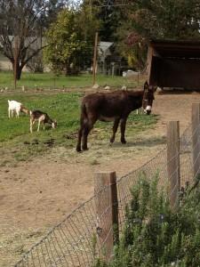 Donkey IMG_1509