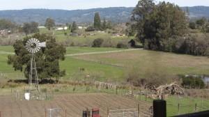 Mariquita Farm IMG_3700