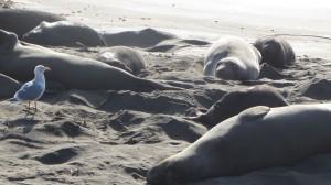 Seals and Seabird IMG_3767