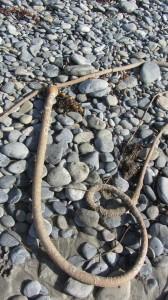 Seaweed and Rocks IMG_3744