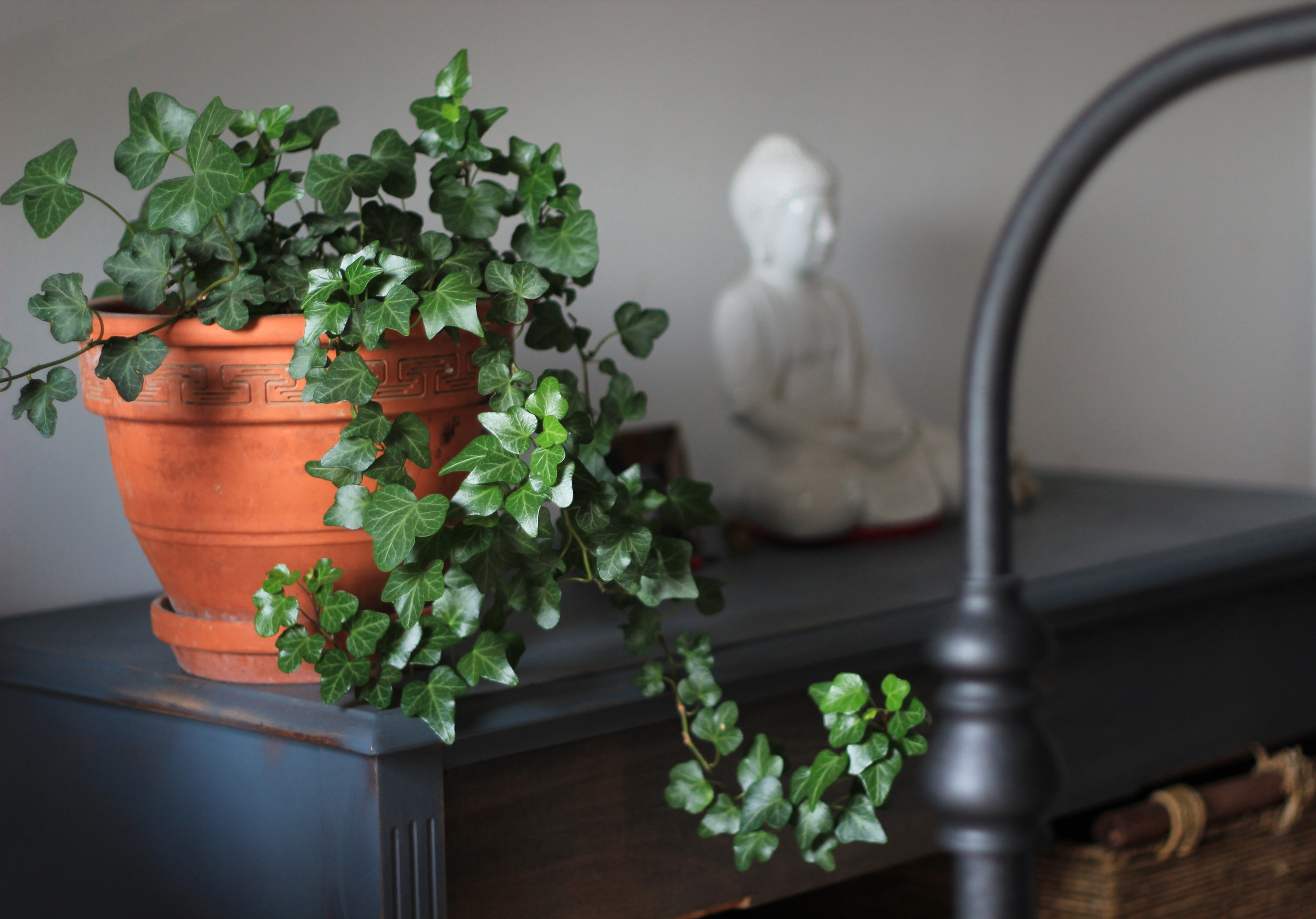 Vine in orange pot next to a white sitting Buddha figurine.