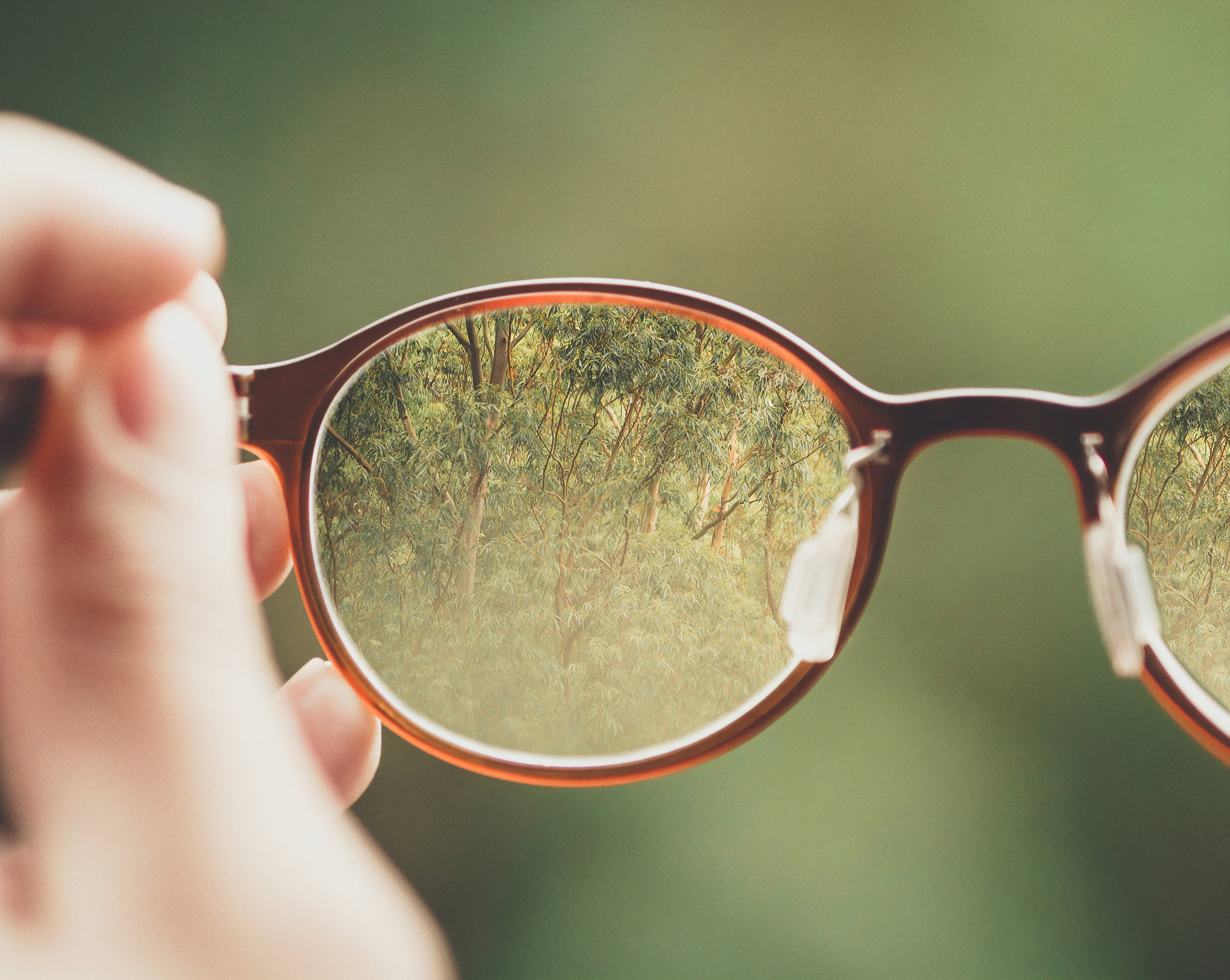 View through an eyeglasses lens brings forest into focus.