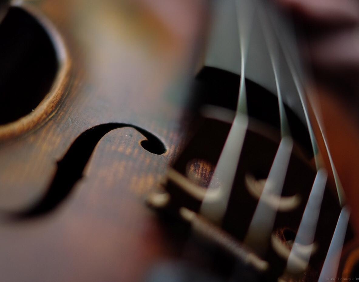 fiddleclose.jpg