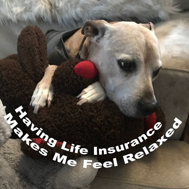 Want to feel as relaxed at this dog?  Life insurance does not need to be complicated.  Want a life insurance quote in less than 1 minutes? Click the link below.  https://app.back9ins.com/apply/candor  #pitbullsofinstagram #denver #lifequotes