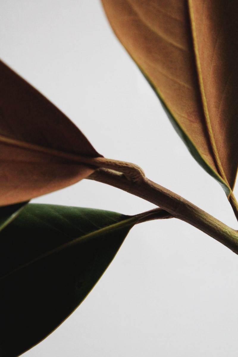 magnolia-leaves4.jpg
