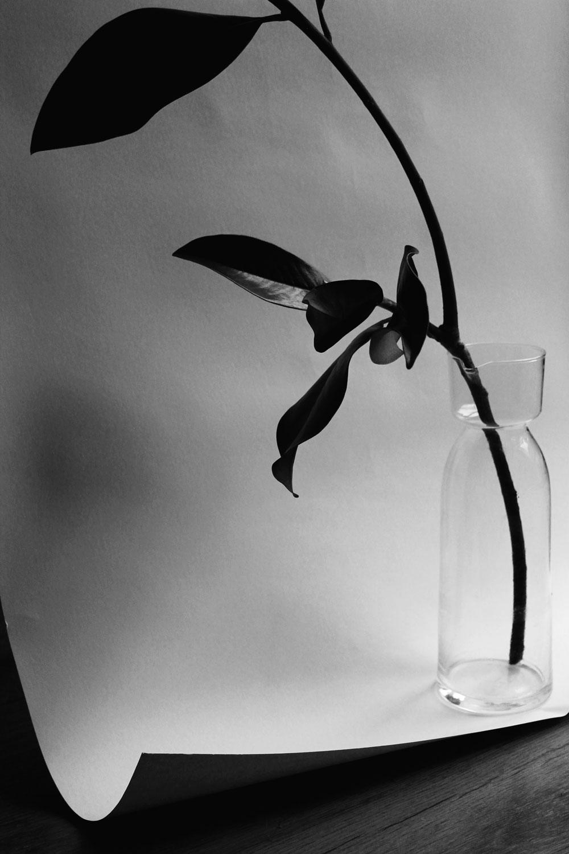 magnolia-leaves.jpg