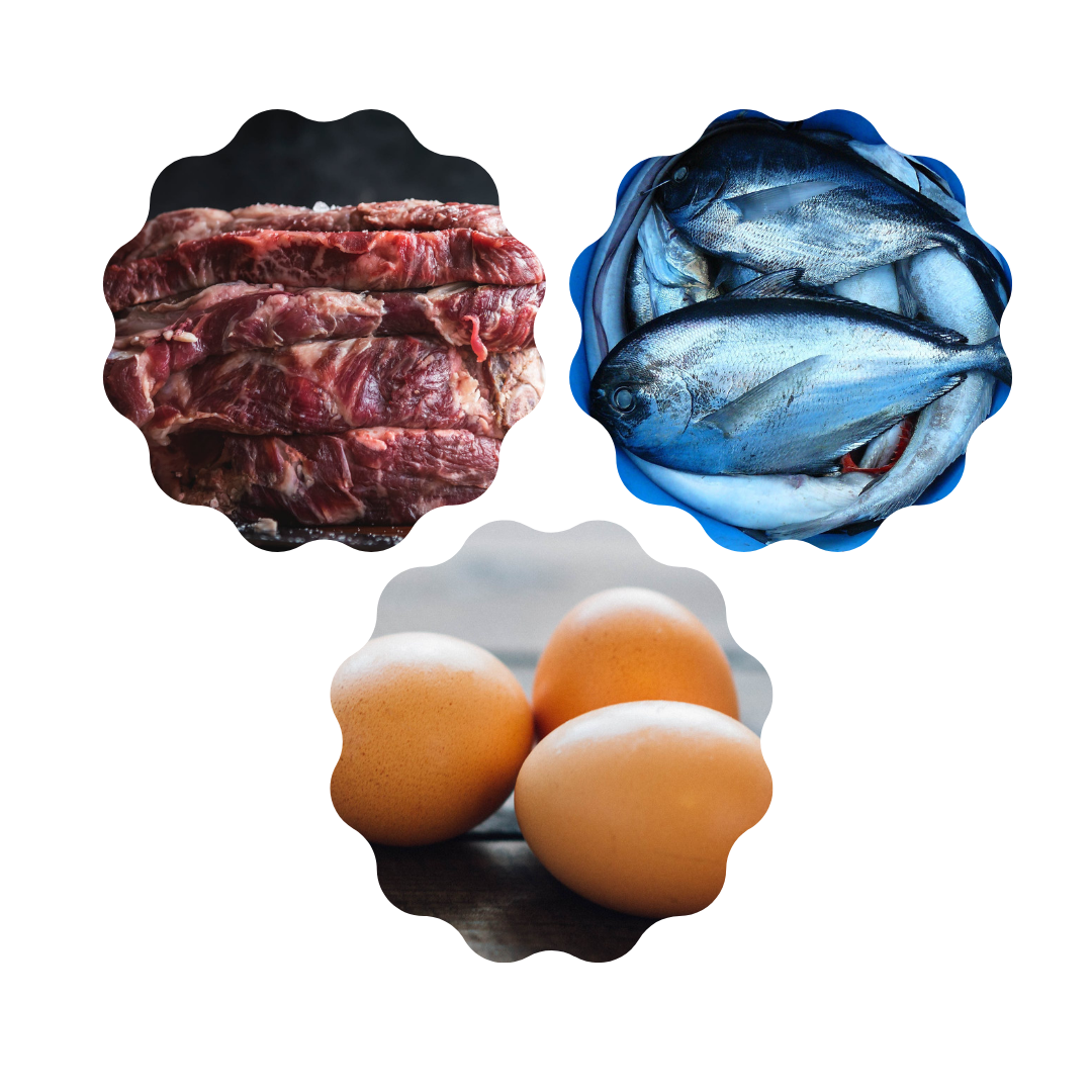 Storing Fish, Egg and Meat.png