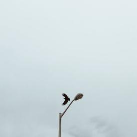 flightt.jpg