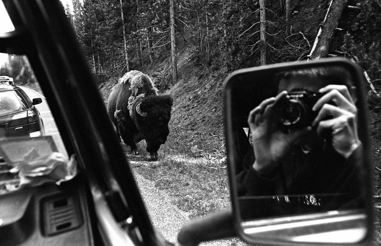 050_Tim_Barber_Untitled_selfportrait_buffalo_low.jpg