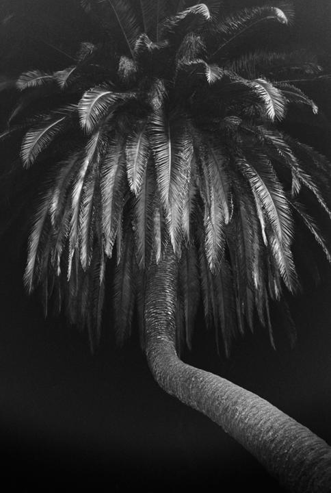076_Tim_Barber_Untitled_palm_low.jpg