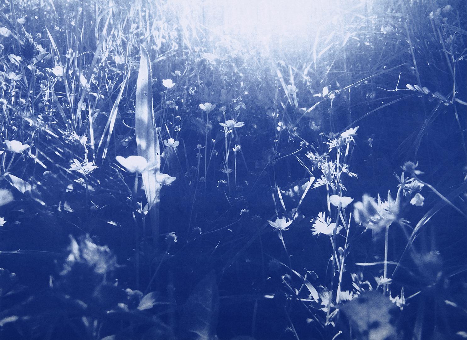 24_TIM_BARBER_BLUES.jpg