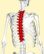 Thoracic+Spine.jpg
