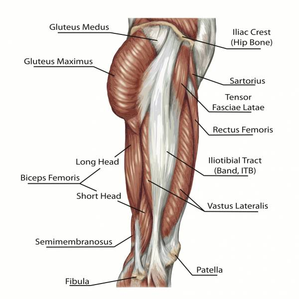 Glute Muscles.jpg