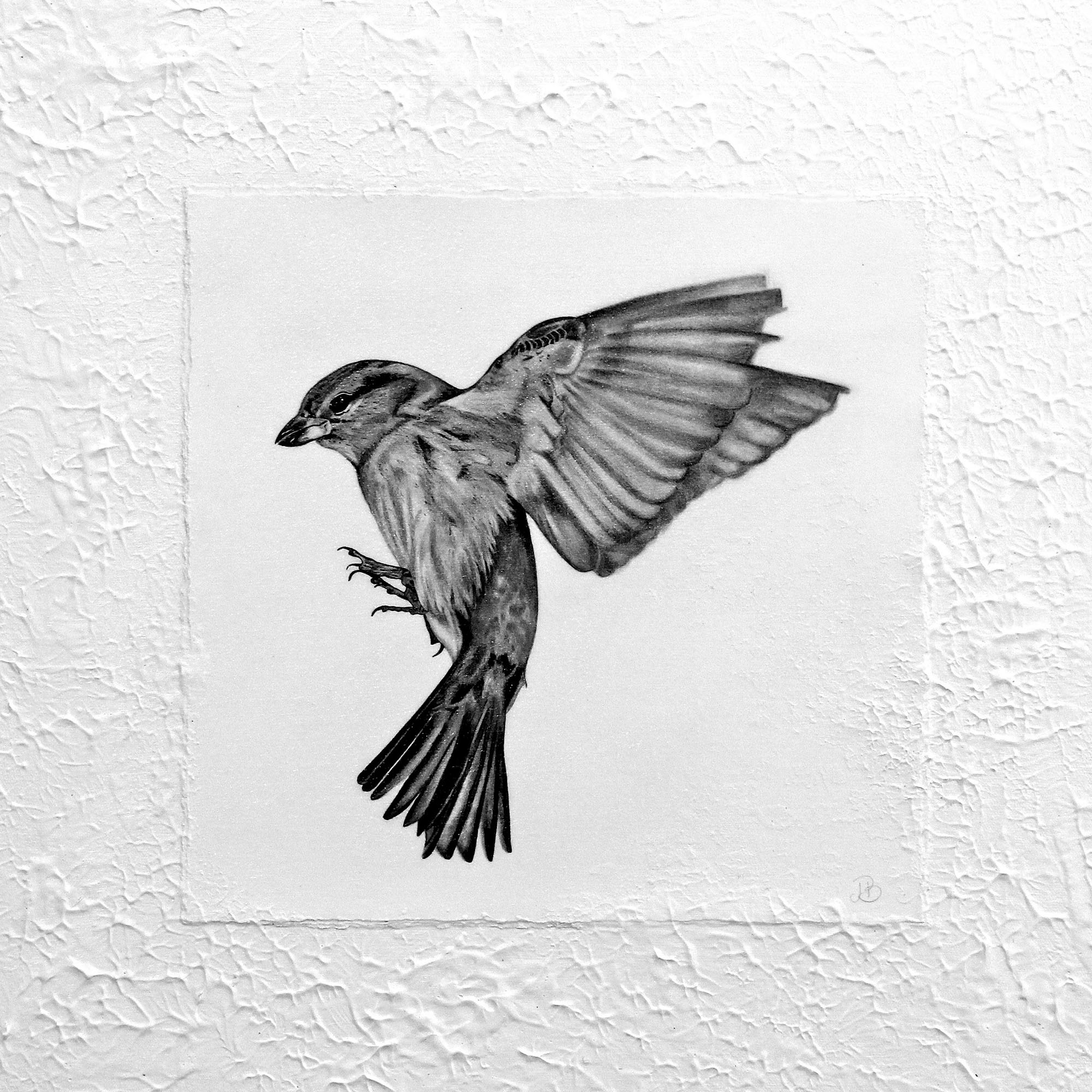 - 'Nowhere To Land'60 x 60cmGraphite on paper, adhered to painted canvas and sealed with a gel coating. Ready to hang.Also available as a print$450ENQUIRE