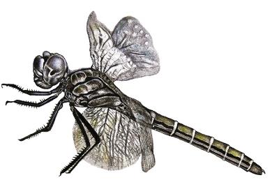 dragonfly.tiny.jpg