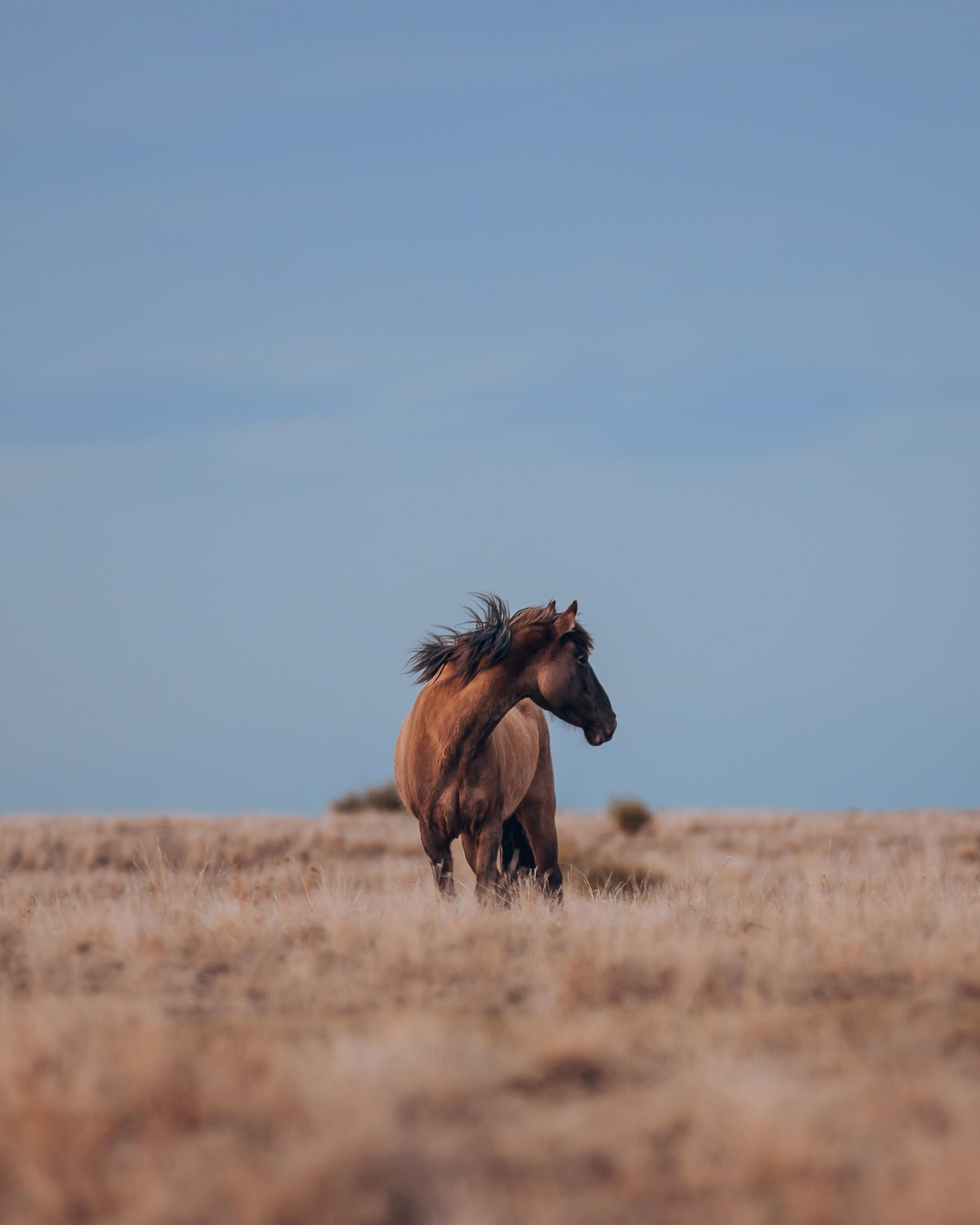 wild-mustang-horse-portrait-colorado.JPG