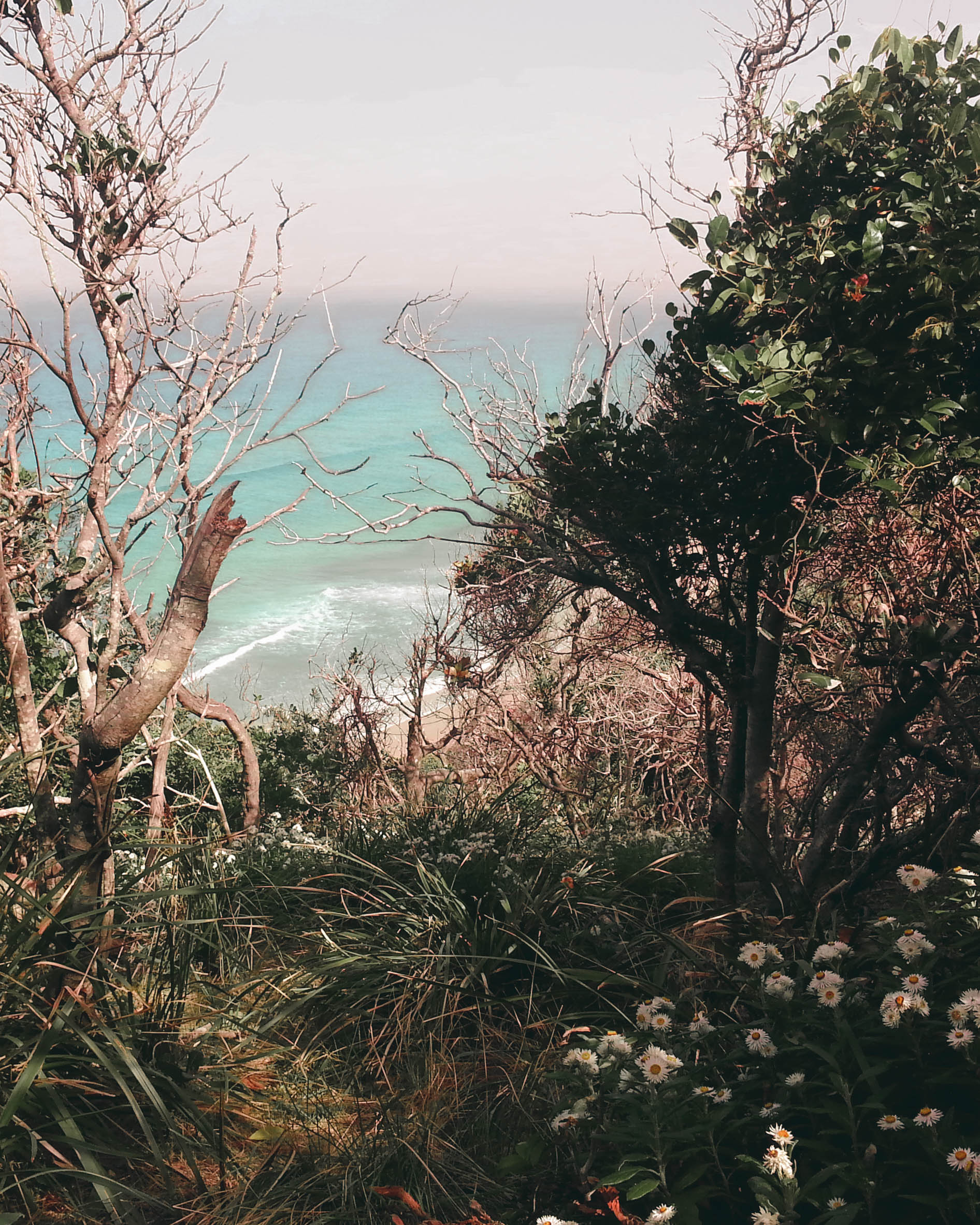 A glimpse of Whites Beach through a rain forest thicket of trees and wildflowers