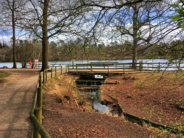 Black Park, Buckinghamshire. Picture credit:   Timo Newton-Syms  , Flickr.com - Under Creative Commons