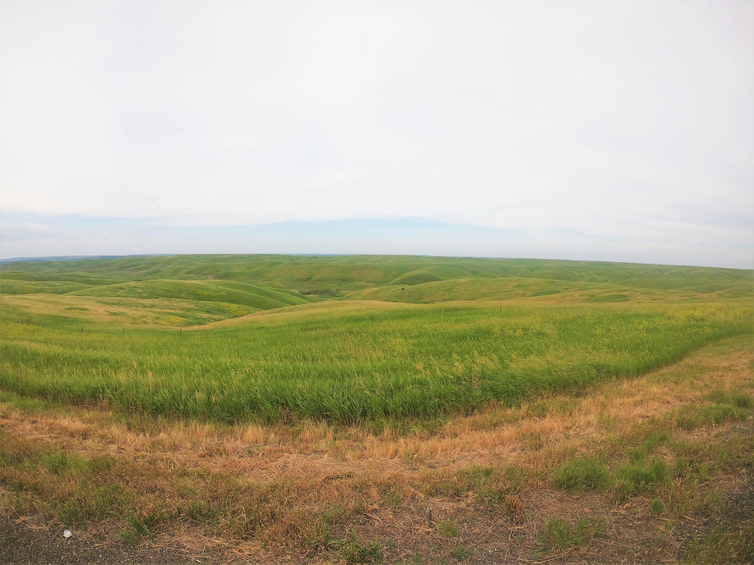 South Dakota grasslands