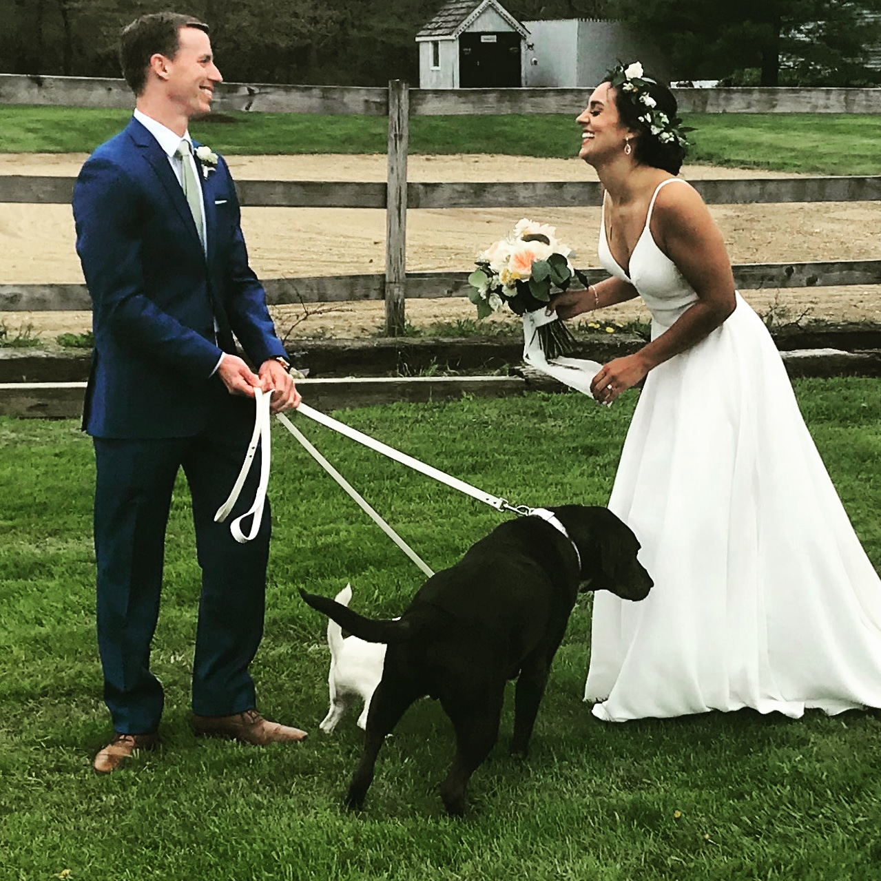 Bride and groom with dogs.jpg