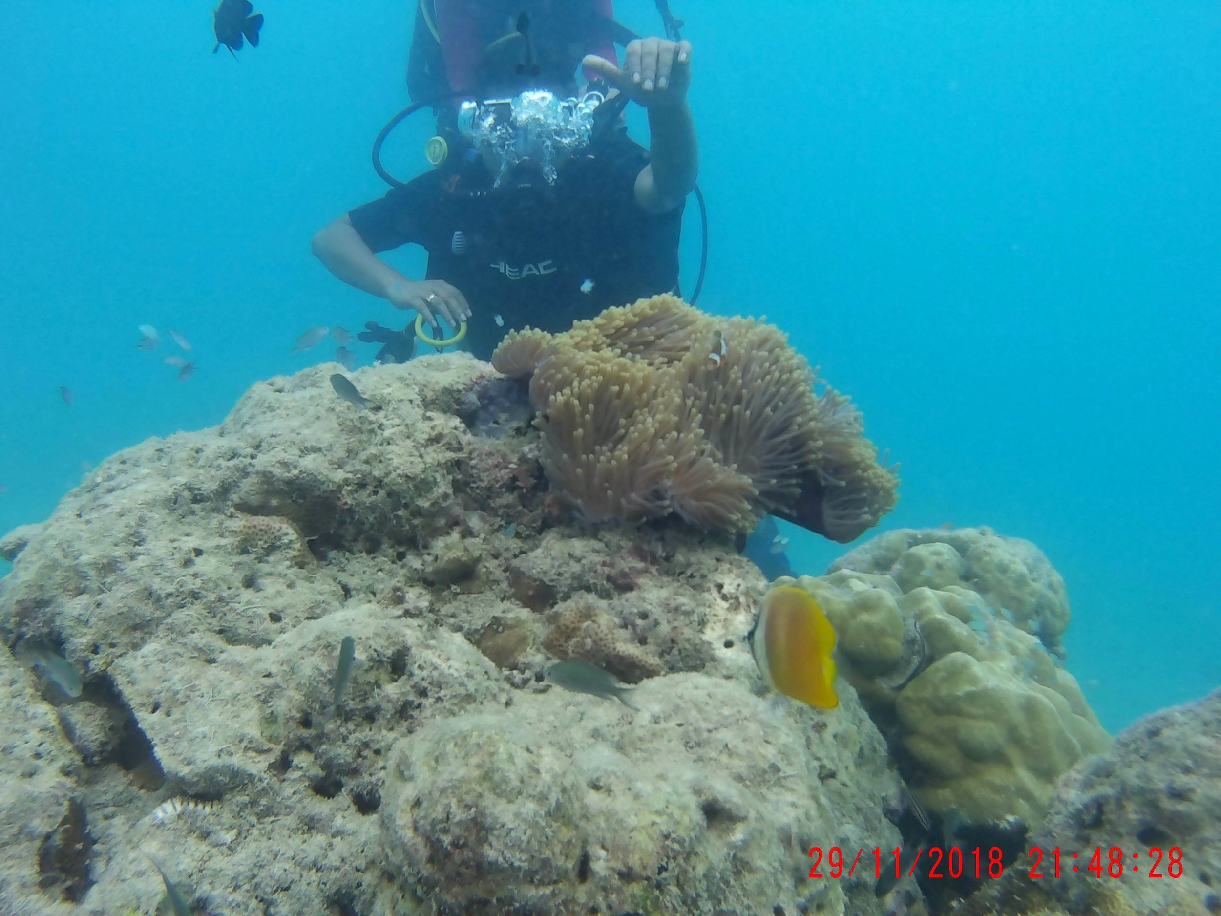 Scuba Diving at Havelock.JPG