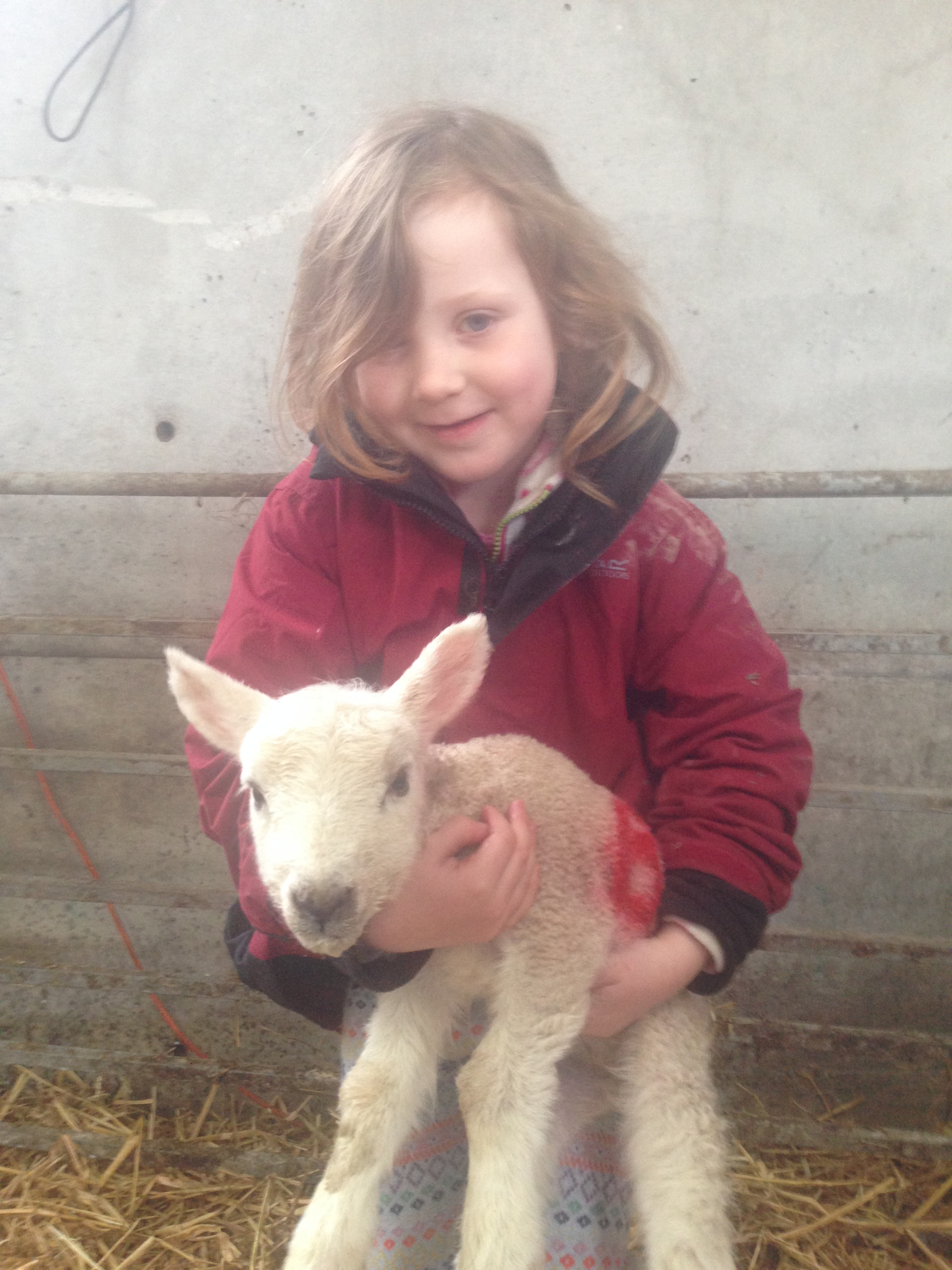Elsie launder enjoying being head SHEPHERDESS in the orphan lamb pen