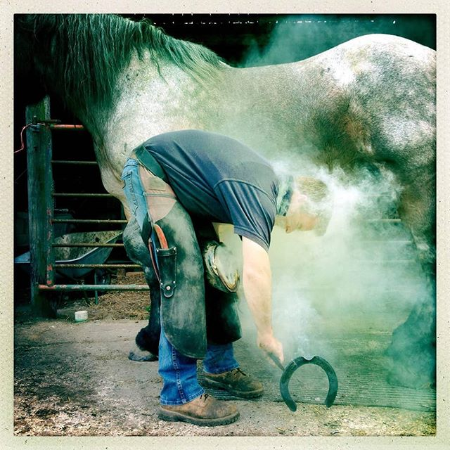 Good at carpentry? Like animals? Maybe try being a farrier! 🐎 .  Come along to our course and learn all you need to know about becoming a farrier with full hands on experience with a champion farrier 🏆 .  Date: 26th October 2019 .  Book by the end of September and get 10% off 😎 .  #farriery #championfarrier #farrierycourse #trade #hardgraft  #learnatrade #skills #equinefarriery #prevet #learnwithus #equinecare #blacksmith #crafts