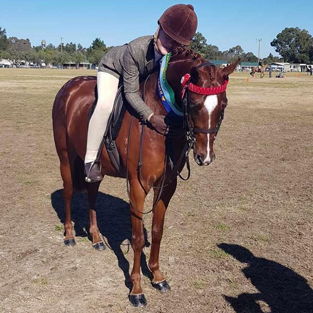 Who had a fun weekend with their equine bestfriends!? @equinebella_ competing at Hawkesbury Show.  Don't forget to send us your showing photos. #everythingshowhorse #ponies #showing #showhorse #esh