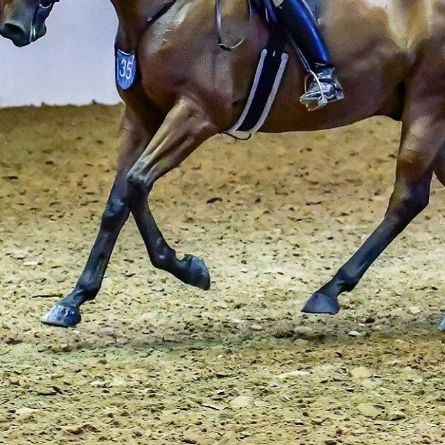 Everything Shoe Horse! For all your show horse needs visit our website today. Link in bio 🦄🦄🦄