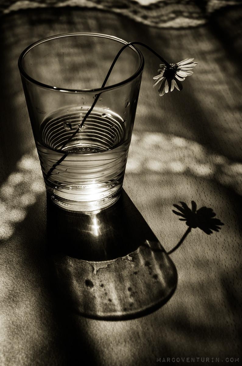 dark-spring-4.jpg
