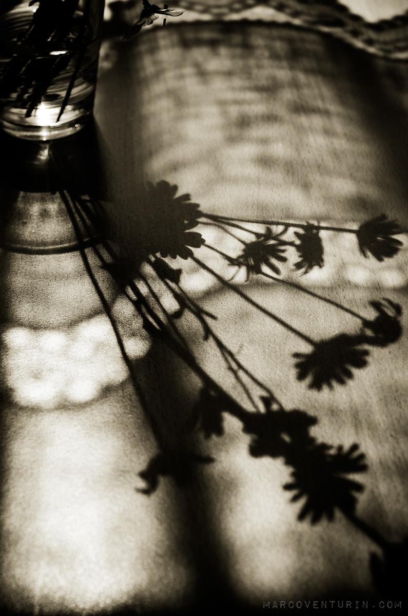 dark-spring-6.jpg