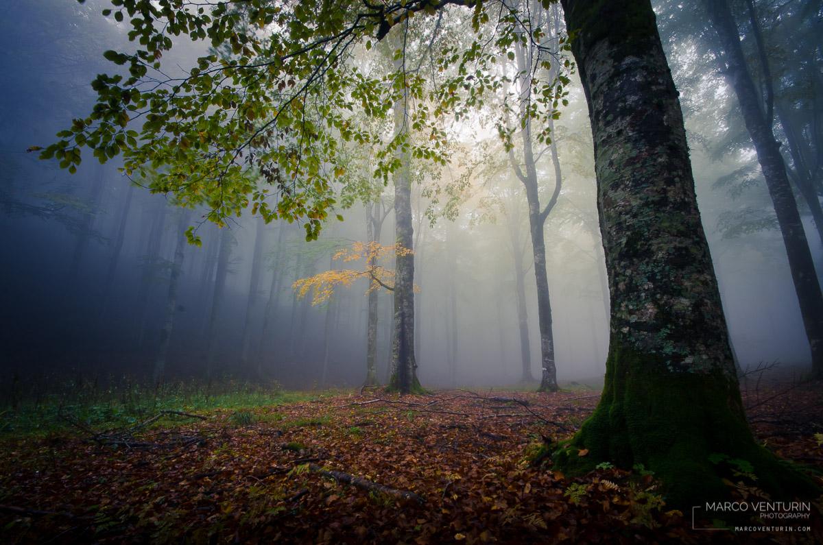 foggy blue (2)