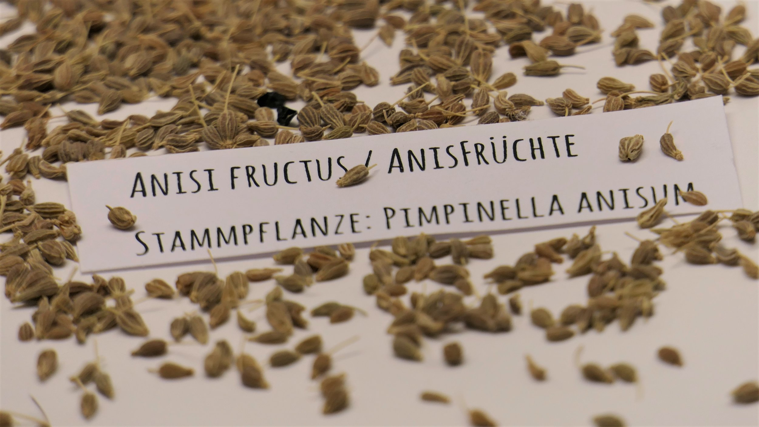 anisi_fructus.jpg