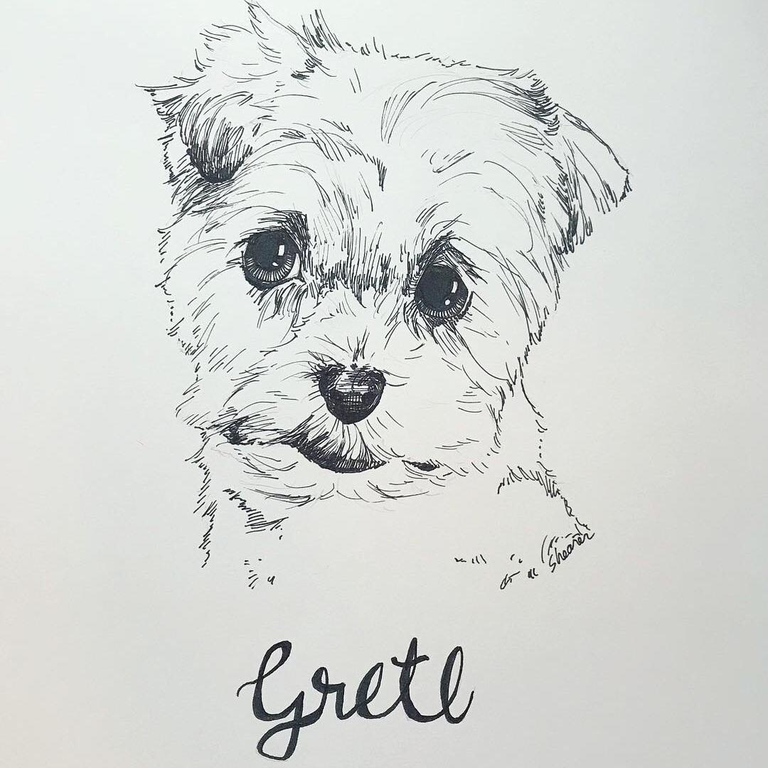 SketchGretl.JPG