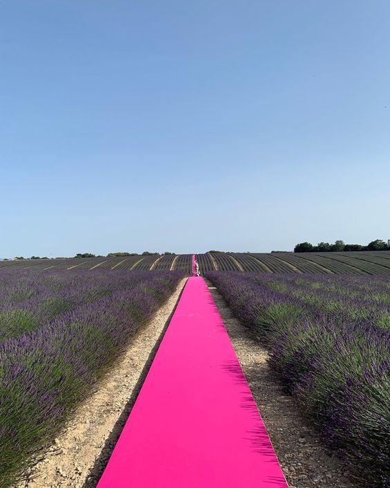 Lavender Fields - Source: Jaquemus, Luxury Brand