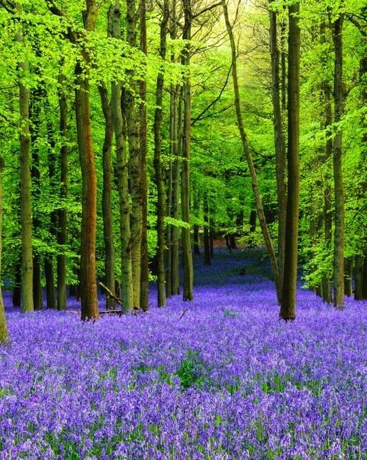 Bluebell Woodlands - Photographer: Simon Byre