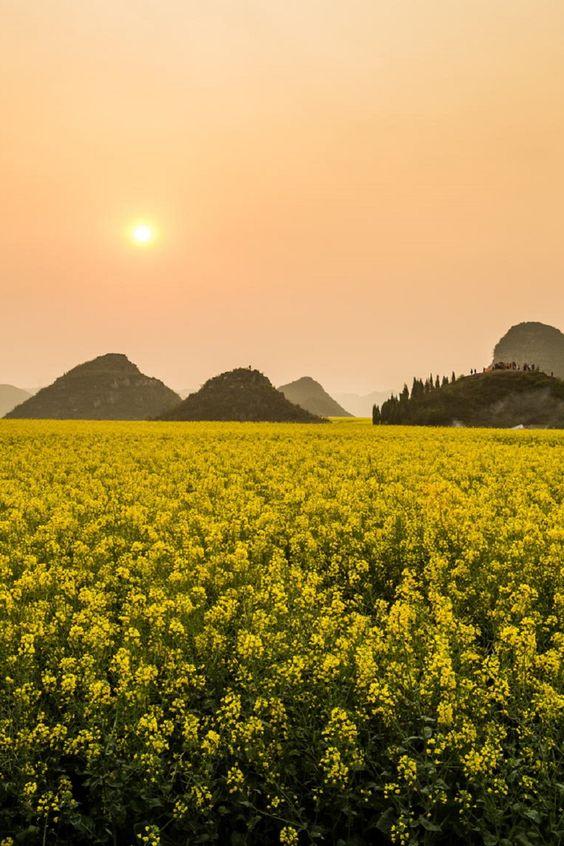 Canola Fields, Rape flowers - Photographer: Wu Zhou