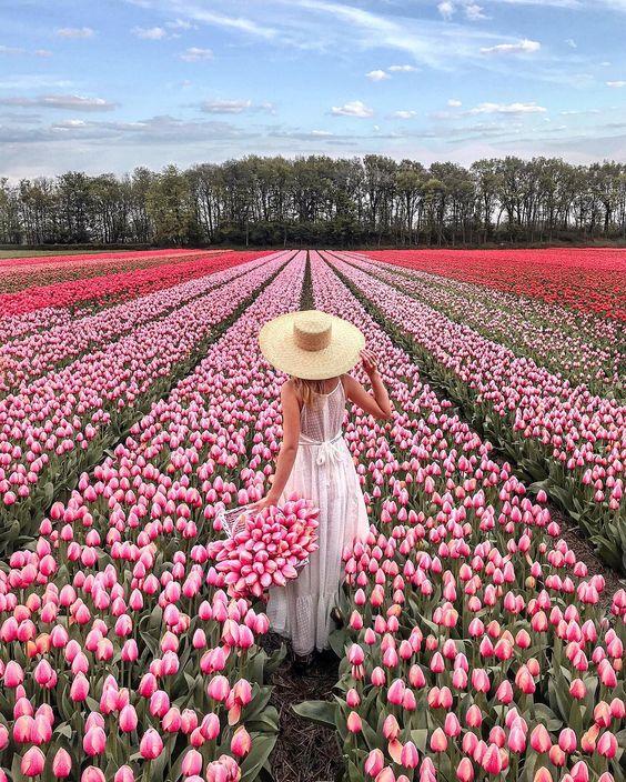 Keukenhof Gardens - Source: Polabur, Social Media Influencer