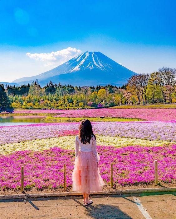 Shibazakura Flower Fields - Source: Kyogo Ueda, Social Media Influencer