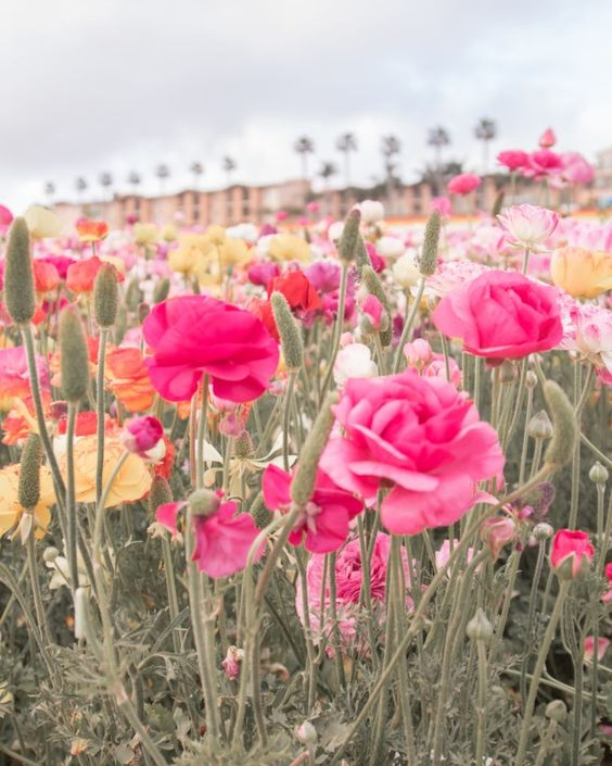 Poppy Fields - Source: Jaci Marie, Social Media Influencer