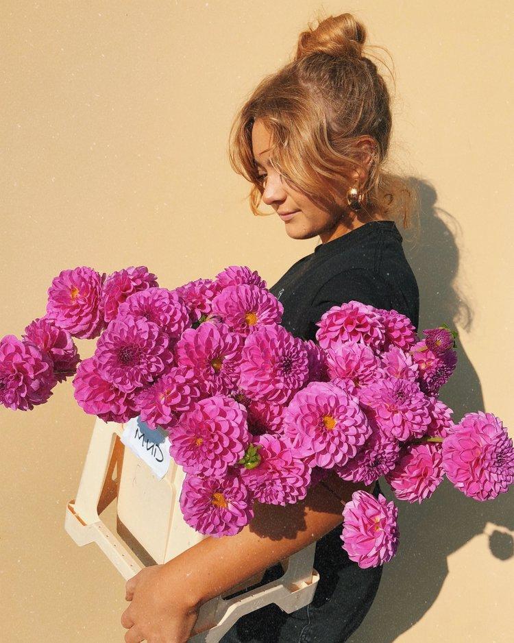 DAHLIAS - Baillie w/ dahlias grown in Scotland by Rosie at Scottish Cut Flowers