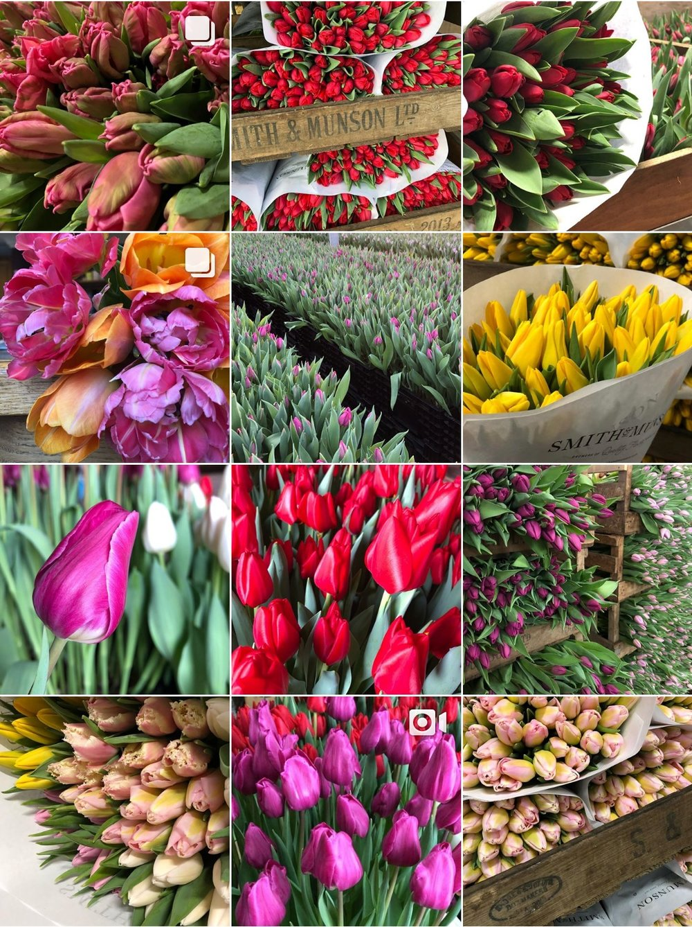 Why should people buy British? - When you buy British, you are supporting a British company, that employs local people, it's a company who loves what they do. With our flowers they have been grown in the U.K. with love and care, by a family who wants to share that with everyone.
